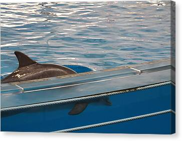 Dolphin Show - National Aquarium In Baltimore Md - 121213 Canvas Print by DC Photographer