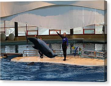 Dolphin Show - National Aquarium In Baltimore Md - 1212138 Canvas Print by DC Photographer