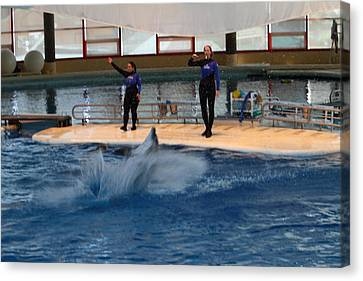 Dolphin Show - National Aquarium In Baltimore Md - 1212140 Canvas Print by DC Photographer