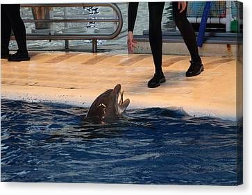 Dolphin Show - National Aquarium In Baltimore Md - 1212151 Canvas Print by DC Photographer