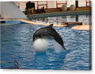 Dolphin Show - National Aquarium In Baltimore Md - 1212160 Canvas Print by DC Photographer