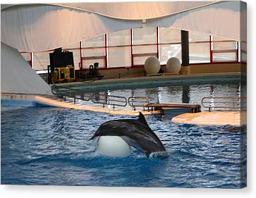 Landmark Canvas Print - Dolphin Show - National Aquarium In Baltimore Md - 1212166 by DC Photographer