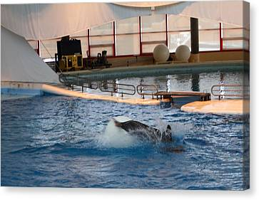 Dolphin Show - National Aquarium In Baltimore Md - 1212167 Canvas Print by DC Photographer