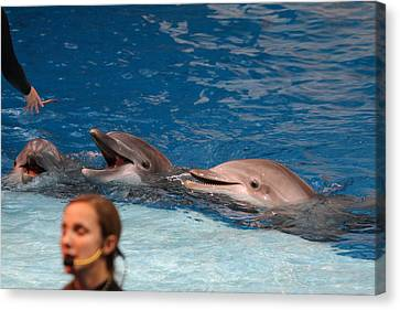 Dolphin Show - National Aquarium In Baltimore Md - 1212177 Canvas Print by DC Photographer