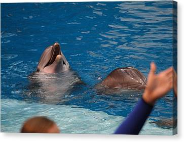 Dolphin Show - National Aquarium In Baltimore Md - 1212182 Canvas Print by DC Photographer