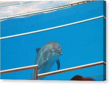 Dolphin Canvas Print - Dolphin Show - National Aquarium In Baltimore Md - 1212190 by DC Photographer