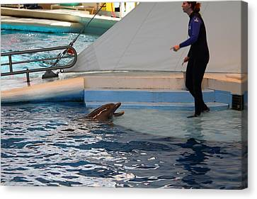 Dolphin Show - National Aquarium In Baltimore Md - 1212195 Canvas Print by DC Photographer