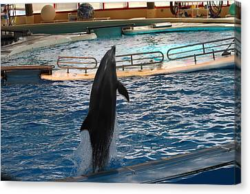 Dolphin Show - National Aquarium In Baltimore Md - 1212209 Canvas Print by DC Photographer