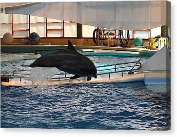 Dolphin Show - National Aquarium In Baltimore Md - 1212214 Canvas Print by DC Photographer