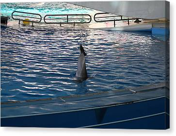 Dolphin Show - National Aquarium In Baltimore Md - 121222 Canvas Print by DC Photographer