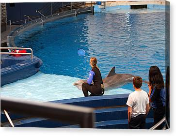 Dolphin Show - National Aquarium In Baltimore Md - 1212221 Canvas Print by DC Photographer