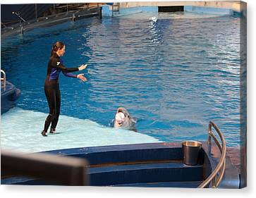 Dolphin Show - National Aquarium In Baltimore Md - 1212226 Canvas Print by DC Photographer