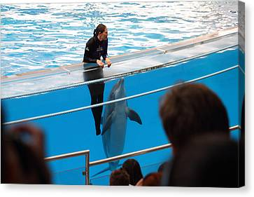 Dolphin Show - National Aquarium In Baltimore Md - 1212227 Canvas Print by DC Photographer