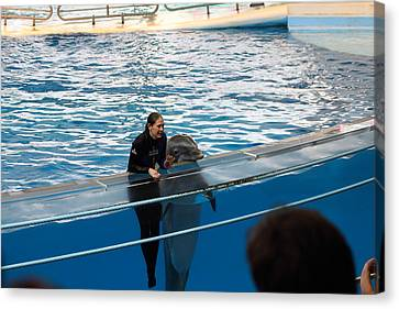 Dolphin Show - National Aquarium In Baltimore Md - 1212229 Canvas Print by DC Photographer