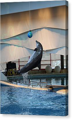 Dolphin Show - National Aquarium In Baltimore Md - 1212236 Canvas Print by DC Photographer
