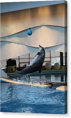 Dolphin Show - National Aquarium In Baltimore Md - 1212237 Canvas Print by DC Photographer