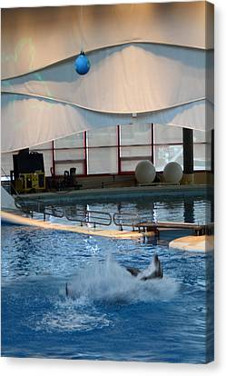 Dolphin Show - National Aquarium In Baltimore Md - 1212240 Canvas Print