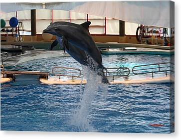 Historic Canvas Print - Dolphin Show - National Aquarium In Baltimore Md - 1212248 by DC Photographer
