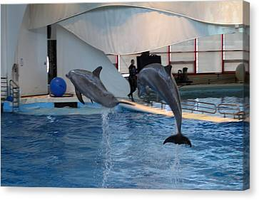 Dolphin Show - National Aquarium In Baltimore Md - 1212257 Canvas Print by DC Photographer