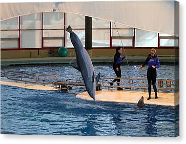 Dolphin Show - National Aquarium In Baltimore Md - 121226 Canvas Print by DC Photographer