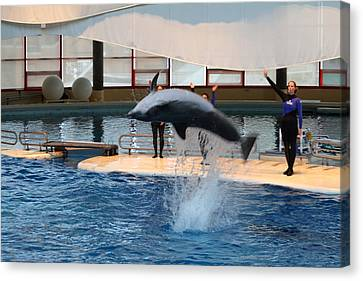 Dolphin Show - National Aquarium In Baltimore Md - 1212271 Canvas Print by DC Photographer