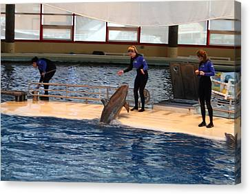 Dolphin Show - National Aquarium In Baltimore Md - 121231 Canvas Print by DC Photographer