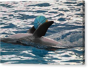 Dolphin Show - National Aquarium In Baltimore Md - 121234 Canvas Print by DC Photographer