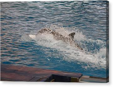 Dolphin Show - National Aquarium In Baltimore Md - 121251 Canvas Print by DC Photographer