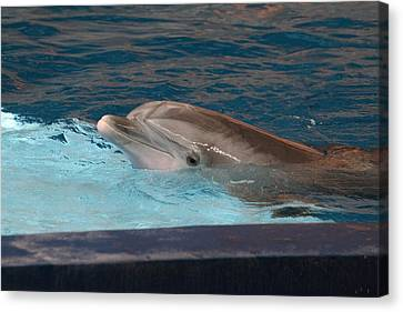 Dolphin Show - National Aquarium In Baltimore Md - 121261 Canvas Print by DC Photographer