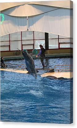 Sealife Canvas Print - Dolphin Show - National Aquarium In Baltimore Md - 121269 by DC Photographer