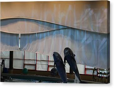 Dolphin Show - National Aquarium In Baltimore Md - 121276 Canvas Print by DC Photographer