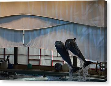 Dolphin Show - National Aquarium In Baltimore Md - 121277 Canvas Print by DC Photographer