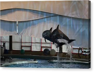 Dolphin Show - National Aquarium In Baltimore Md - 121278 Canvas Print