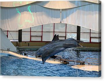 Historic Canvas Print - Dolphin Show - National Aquarium In Baltimore Md - 121284 by DC Photographer