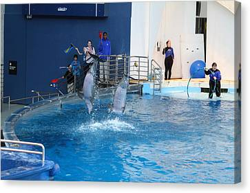 Dolphin Show - National Aquarium In Baltimore Md - 121291 Canvas Print by DC Photographer