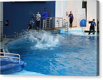 Dolphin Show - National Aquarium In Baltimore Md - 121293 Canvas Print by DC Photographer