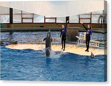 Dolphin Show - National Aquarium In Baltimore Md - 121299 Canvas Print by DC Photographer