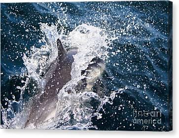 Dolphin Splash Canvas Print