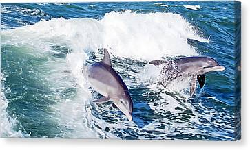 Dolphins Jumping Canvas Print by Aimee L Maher Photography and Art Visit ALMGallerydotcom