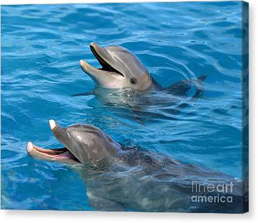 Canvas Print featuring the photograph Dolphins by Kristine Merc