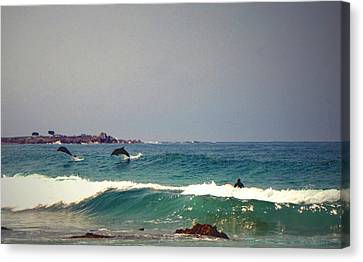 Dolphins Swimming With The Surfers At Asilomar State Beach  Canvas Print