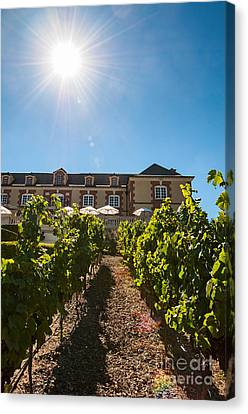 Domaine Carneros Sun - Winery And Vineyard With Sun Flare In Napa Valley California Canvas Print