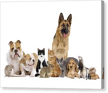 Domestic Mammal Pets Canvas Print