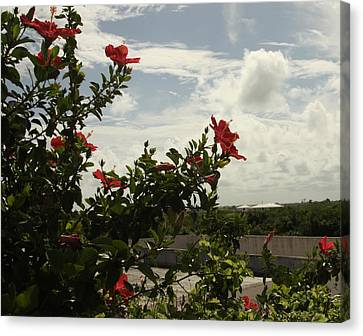 Dominican Red Flower Canvas Print by Mustafa Abdullah