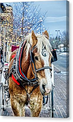 Fort Collins Canvas Print - Donald 2 by Baywest Imaging