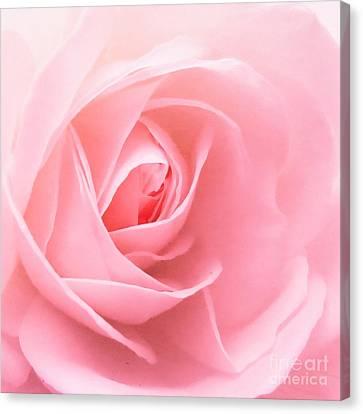 Donation Rose Canvas Print