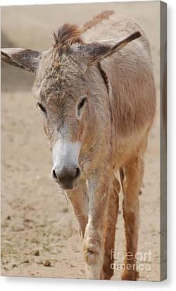 Donkey Canvas Print by DejaVu Designs