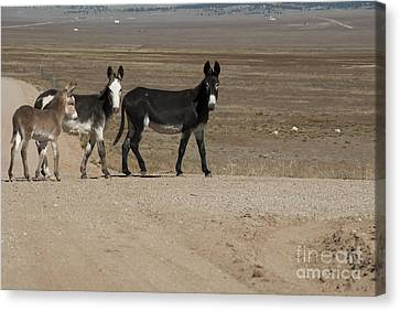 Donkey Family Canvas Print by Juli Scalzi
