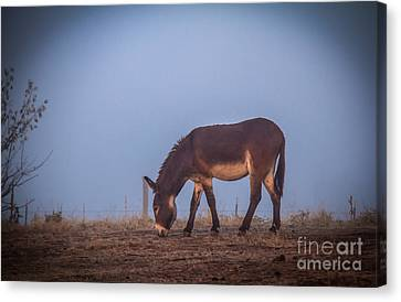 Donkey In The Fog Canvas Print by Robert Bales