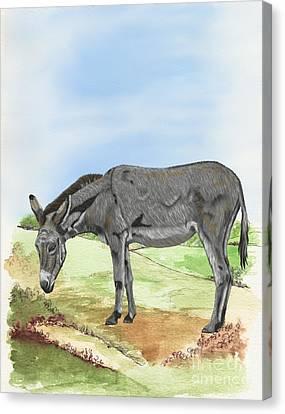 Donkey Canvas Print by Karen Sheltrown